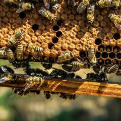 apiary-1867537_1920